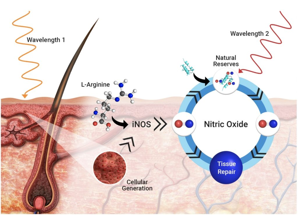 Light_Induced_Nitric_Oxide